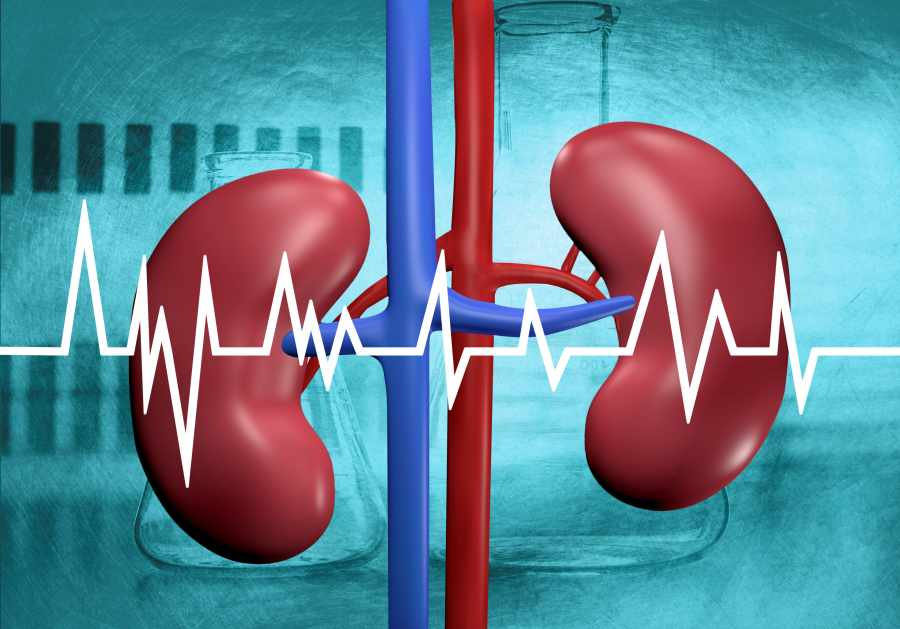 Kidney Function Test in Lajpat Nagar
